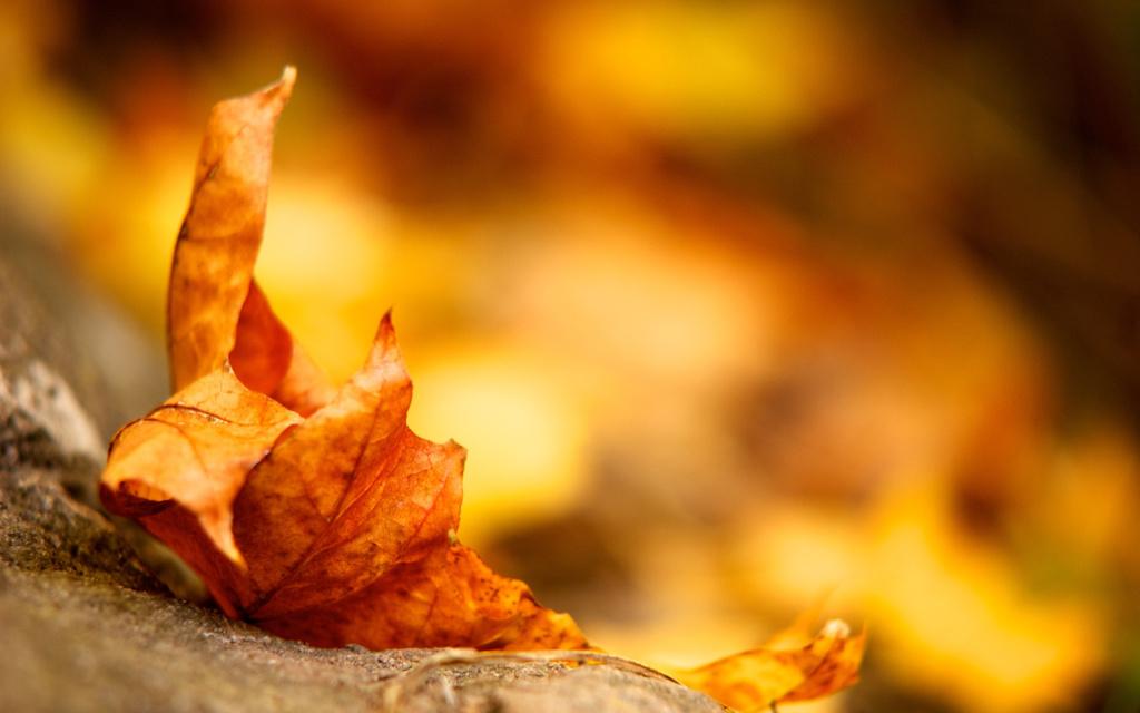 Best-Autumn-Leaf-Macro-Wallpaper-Background1